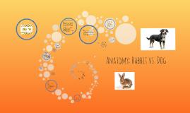 Anatomy: Rabbit vs. Dog