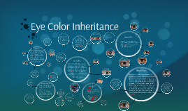 Copy of Eye Color Inheritance