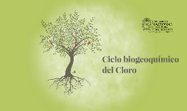 Copy of Ciclo biogeoquimico del Cloro (Cl)