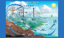 Copy of APES - Sulfur Cycle