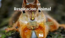 Respiracion Animal