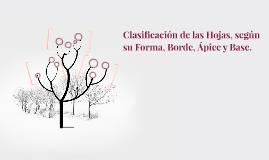Clasificación de las Hojas, según su Forma, Borde, Ápice y B