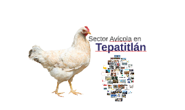 Sector Avicola en Tepatitlán