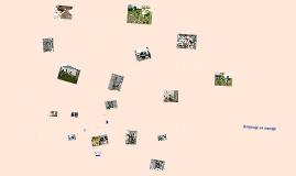 Copy of Schronisko dla zwierząt - Lublin