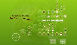 Morfología del fruto.