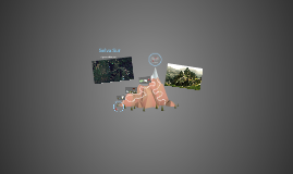 Selva: Aguascalientes