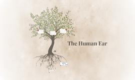 Psychoacoustics - The Human Ear
