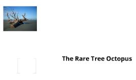 The Rare Tree Octopus!