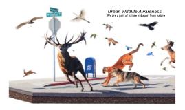 Wildlife Awareness