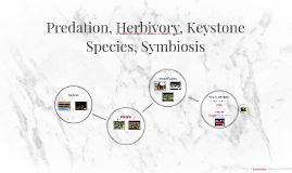 Predation, Herbivory, Keystone Species, Symbiosis