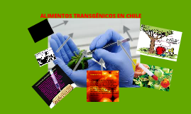 Copy of Copy of alimentos transgenicos