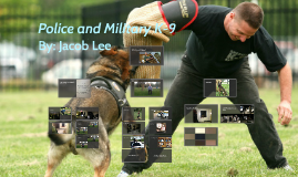 Importance of The K-9 Unit