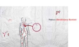 Human Circulation System