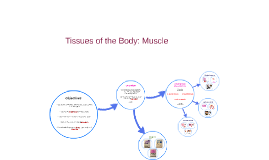 Tissues of the Body: Muscle