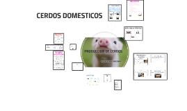 Copy of CERDOS DOMESTICOS