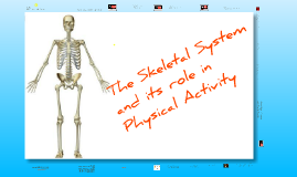 Copy of Skeletal System