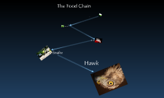 The Food Chain With pictures