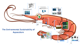 The Environmental Sustainability of Aquaculture