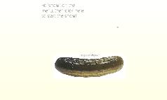 Mt. Olive Pickles: Brand Audit