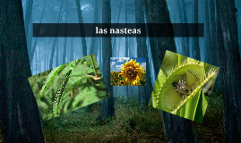 las nasteas