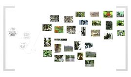 Resguardo Indígena Polines: Reserva