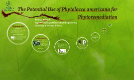 The Potential Use of Phytolacca americana for Phytoremediati