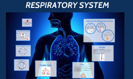 The respiratory system is the set of organs that allows a pe