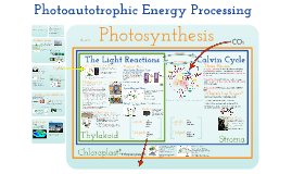 AP Biology in Focus- Chapter 8 Photosynthesis
