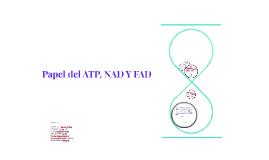 Papel del ATP, NAD Y FAD