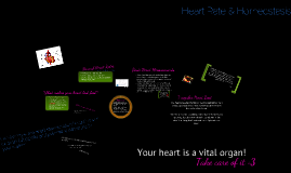 Heart Rate Homeostasis