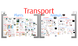 Transport & Gas Exchange (Circulatory and Respiratory Systems)
