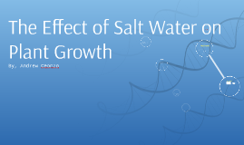 Copy of The Effect of Salt Water on Plant Growth