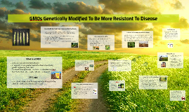 GMOs Genetically Modified To Be More Resistant To Disease