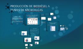 PRODUCCIÓN DE BIODIÉSEL A TRAVES DE MICROALGAS
