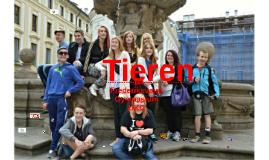Copy of Copy of tieren