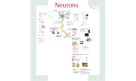 Copy of AP Bio- Communication 4: Neurons