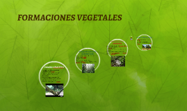 Copy of FORMACIONES VEGETALES