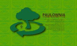 Copy of Copy of Paulownia Clone in Vitro 112®