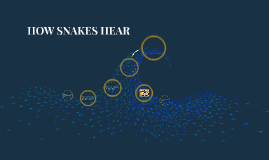 How Shakes Hear - by Finn