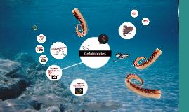Cefalòpodes