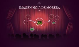 Imagen, hoja de Morera.