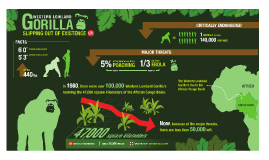 The Western Lowland Gorillas