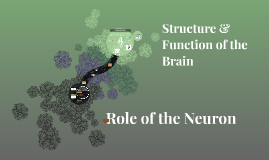 Role of the Neuron/Structure of Brain