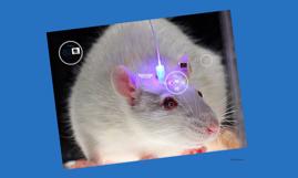 Copy of Optogenetics