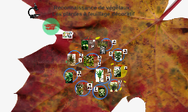 Reconnaissance de végétaux