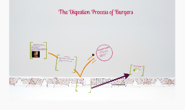 Copy of The Digestion Process of Burgers