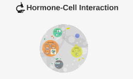 Hormone-Cell Interaction