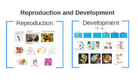 Reproduction and Development (Doyle 7.26.2016)