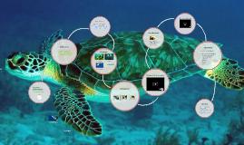 de groene zeeschildpad