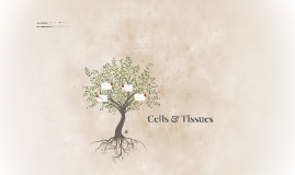 Copy of Cells & Tissues